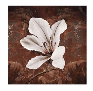 Picture of WALL ART WHITE LILY CANVAS PRINT 30X30