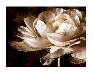 Picture of MANIE WALL ARTWORK ROSES PRINT ON CANVAS 140X70